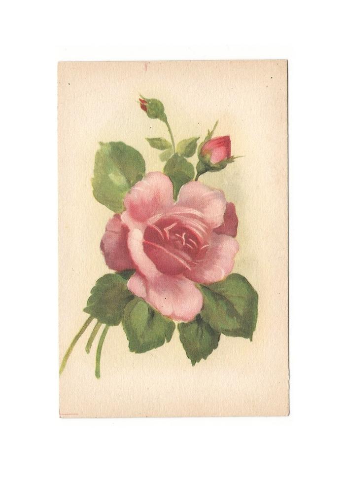 Giulia Carioti rosa10