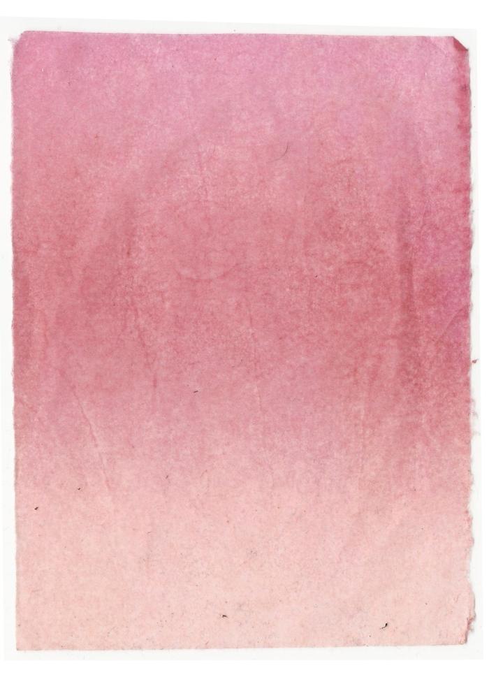 Giulia Carioti rosa11