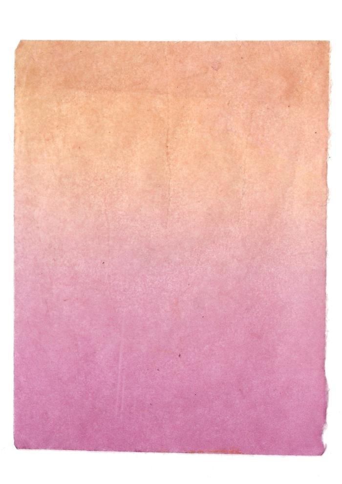 Giulia Carioti rosa14