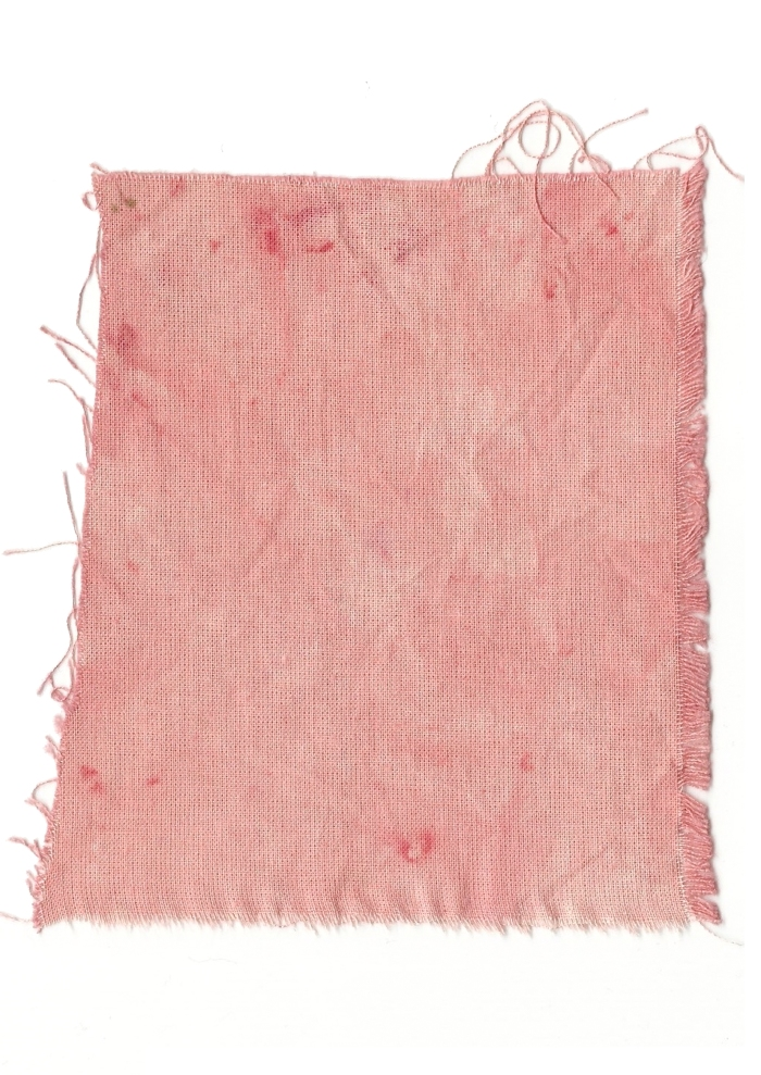 Giulia Carioti rosa15