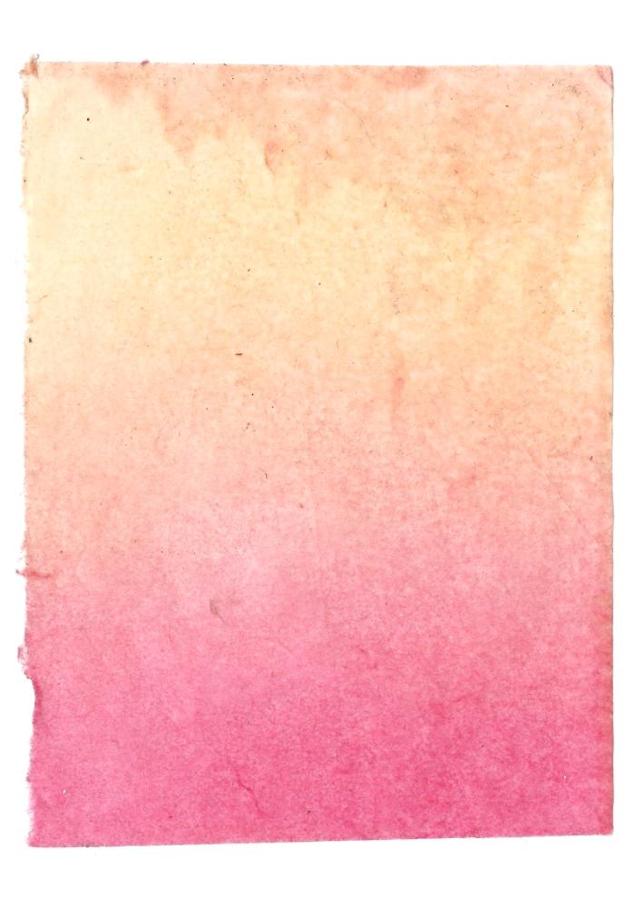 Giulia Carioti rosa16