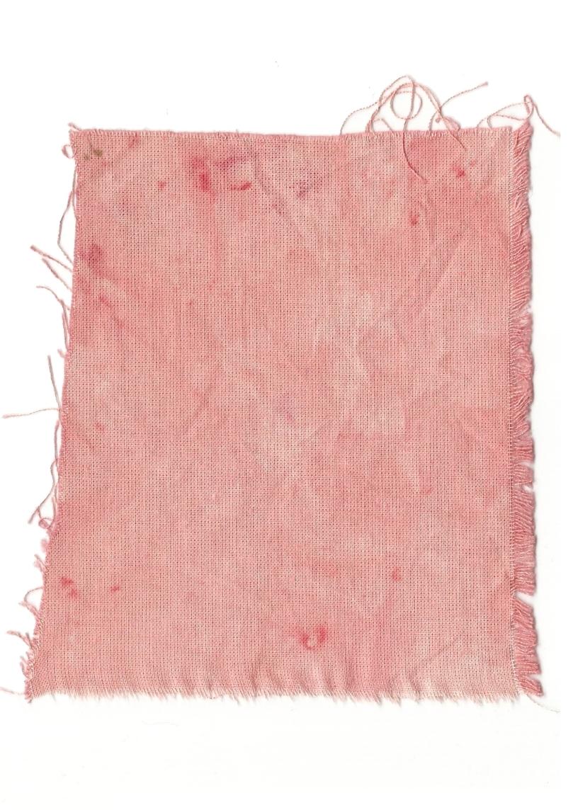 Giulia Carioti rosa18