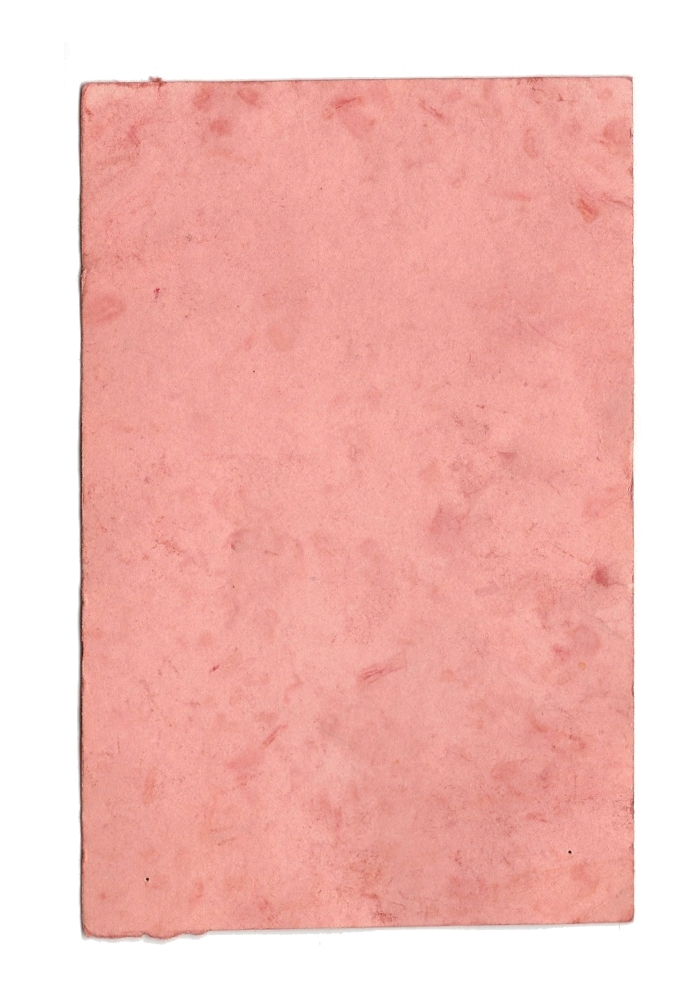 Giulia Carioti rosa2