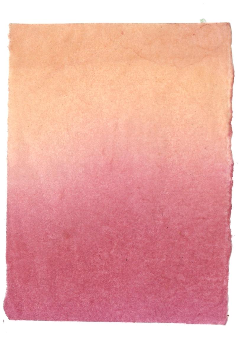 Giulia Carioti rosa27