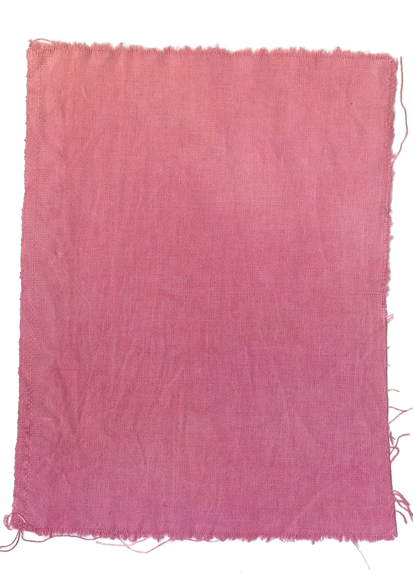 Giulia Carioti rosa28