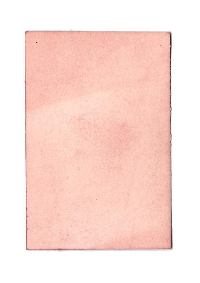 Giulia Carioti rosa4