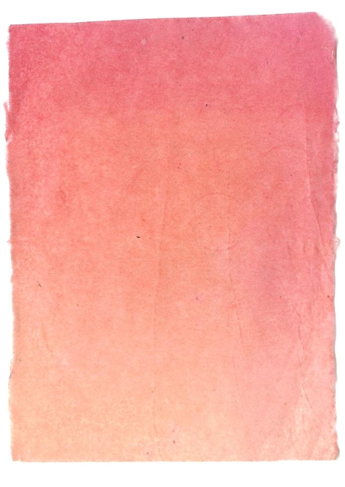 Giulia Carioti rosa5