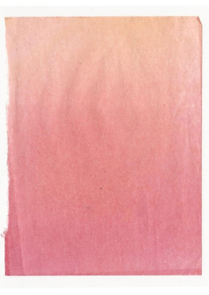 Giulia Carioti rosa9